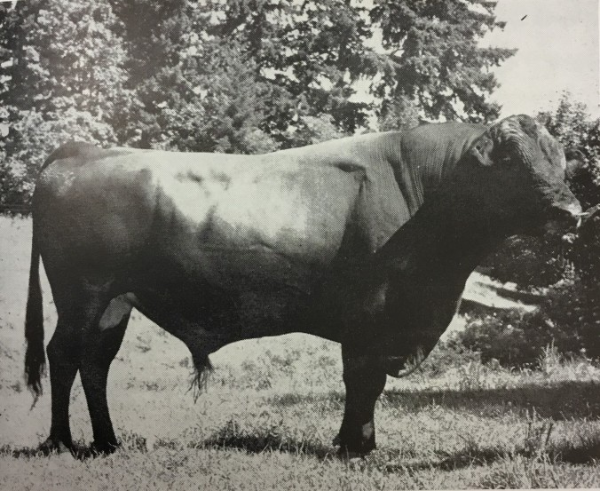 King - Rivercrest Bull 1946-1949