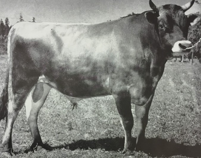 Soli - Rivercrest Farm Bull 1949